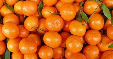 Самое большое количество мандаринового сока выжатого ногами