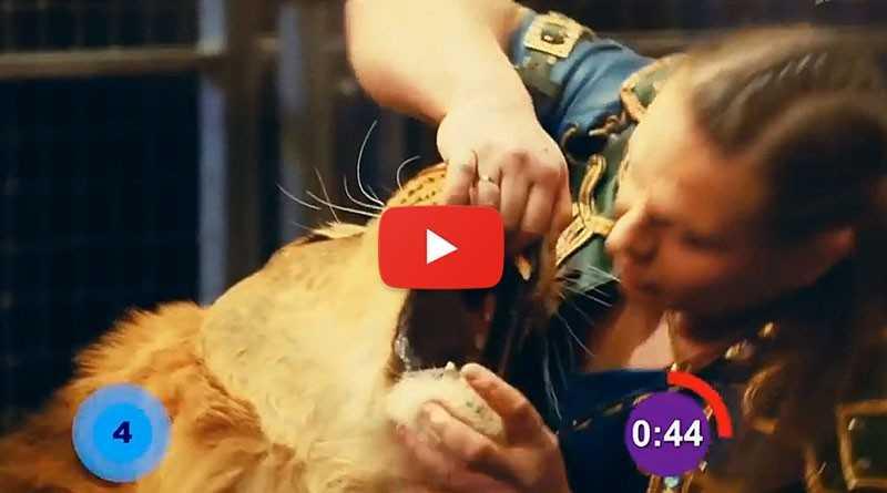 Погружение головы в наибольшее количество пастей разных львов за одну минуту