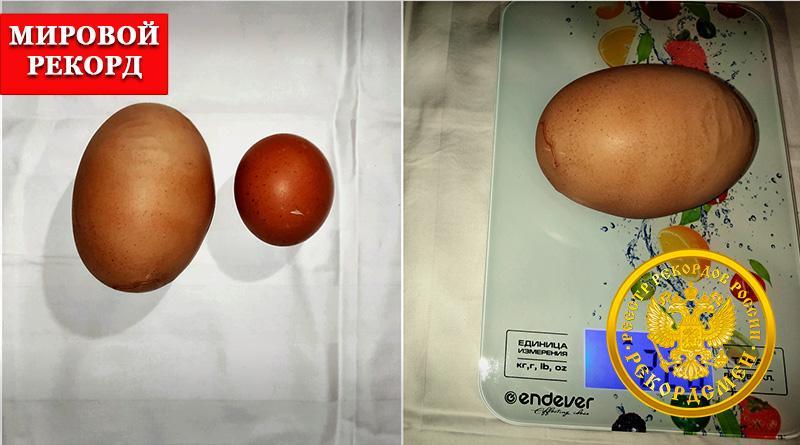 Самое крупное куриное яйцо: 170 граммов